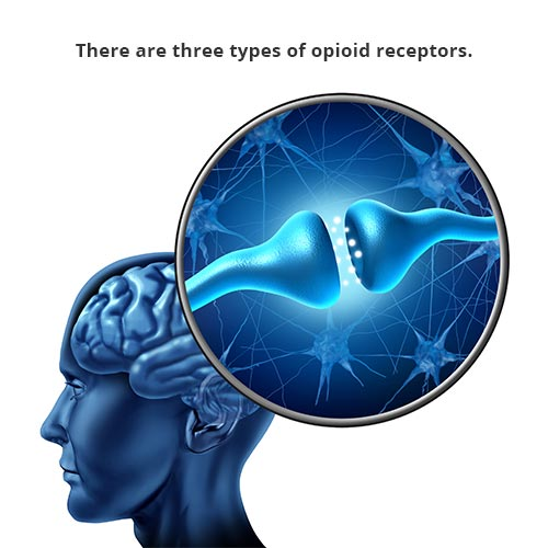 There are three types of opioid receptors.